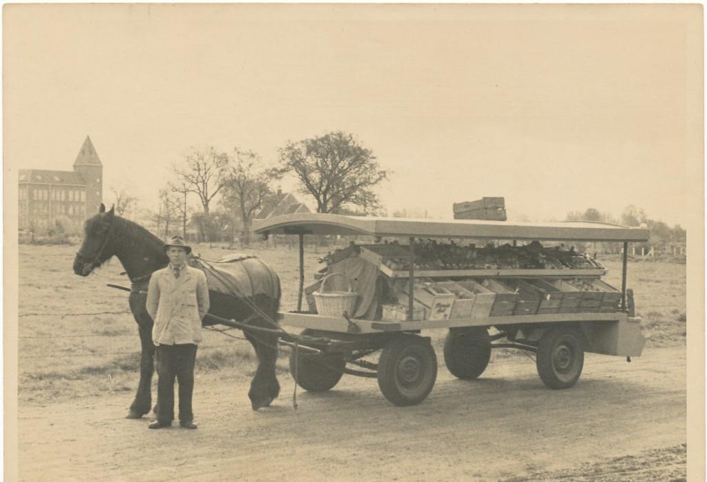 Opa Boltjes met paard en wagen in 1939 (kar heeft houten wielen)