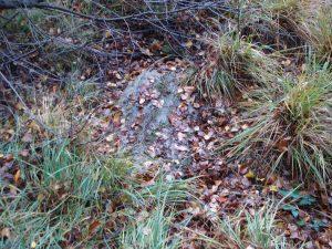 steen tegen het ossenschot